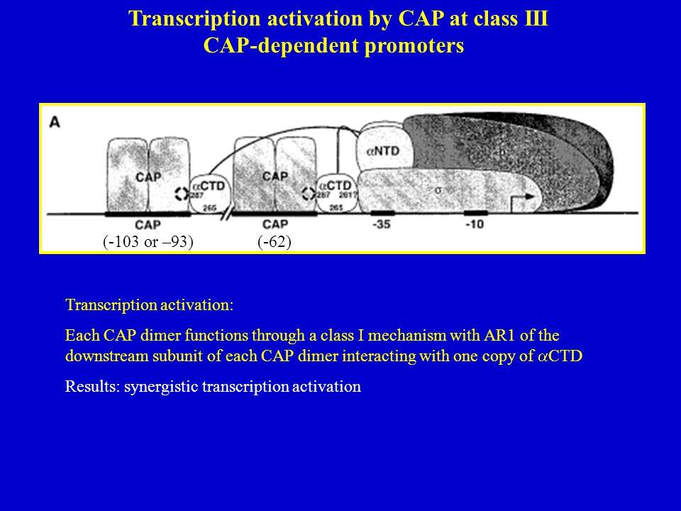 Transcription activation by CAP at class III CAP-dependent promoters (-103 or –93)(-62) Transcription activation: Each CAP dimer functions through a c