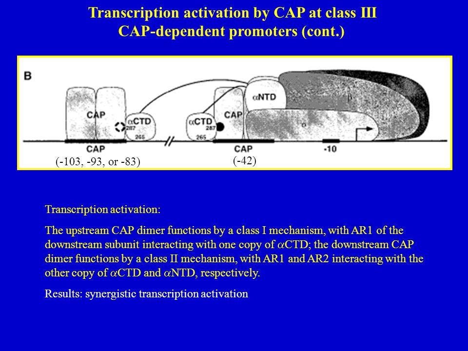 Transcription activation by CAP at class III CAP-dependent promoters (cont.) (-103, -93, or -83) (-42) Transcription activation: The upstream CAP dime