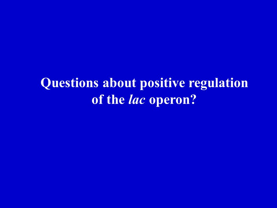 Questions about positive regulation of the lac operon?