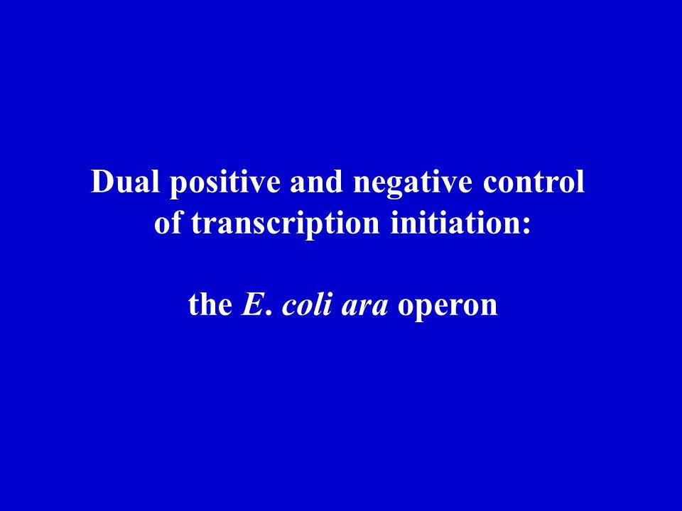Dual positive and negative control of transcription initiation: the E. coli ara operon