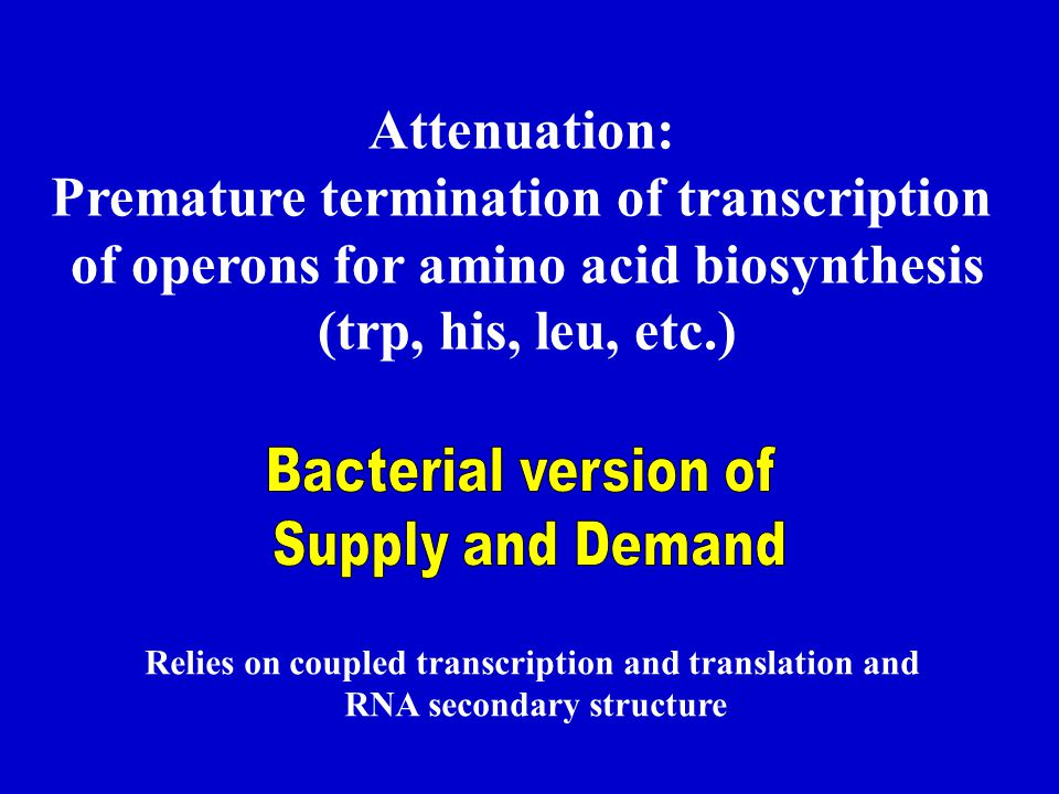 Attenuation: Premature termination of transcription of operons for amino acid biosynthesis (trp, his, leu, etc.) Relies on coupled transcription and t