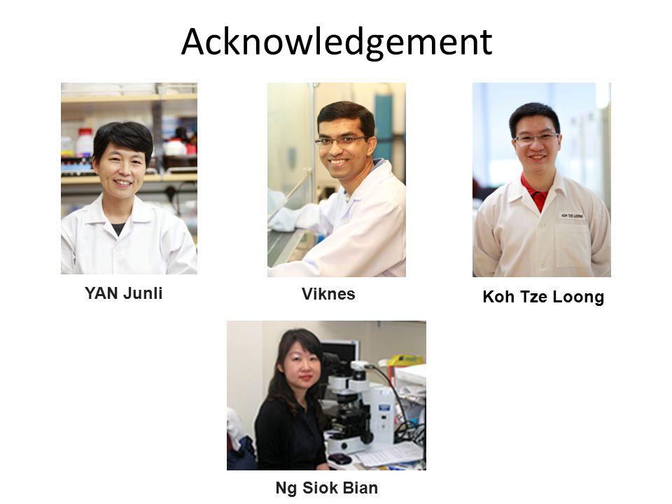 Acknowledgement YAN Junli Viknes Koh Tze Loong Ng Siok Bian