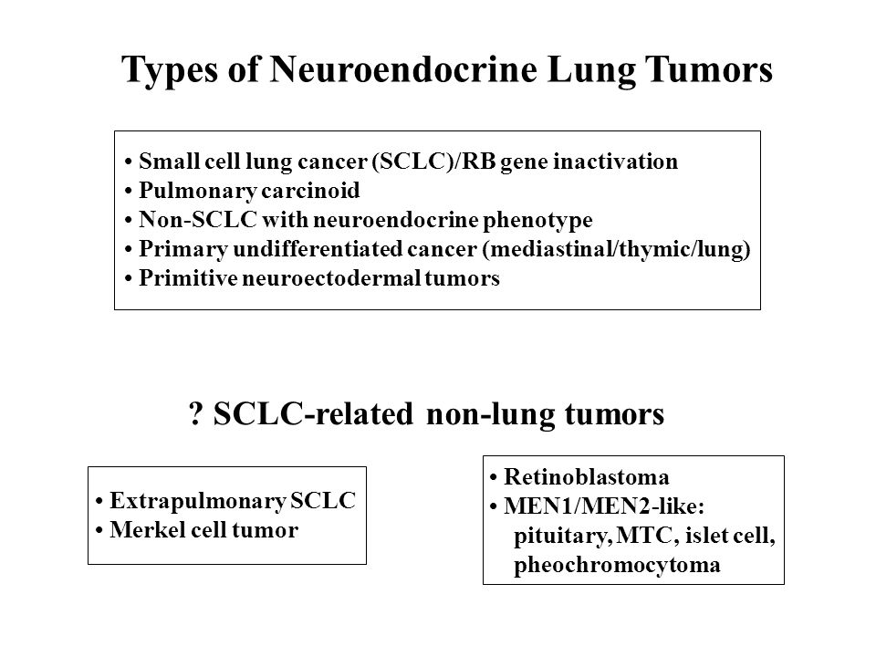 Types of Neuroendocrine Lung Tumors Small cell lung cancer (SCLC)/RB gene inactivation Pulmonary carcinoid Non-SCLC with neuroendocrine phenotype Prim