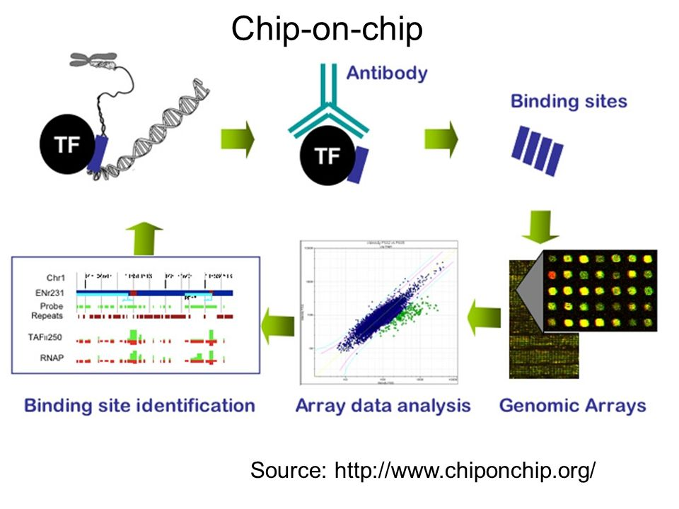 Data Genome-wide location analysis using ChIP- on-chip Each experiment done with one TF 203 TFs experimented with, in rich media conditions 84 of these TFs also experimented with in at least one other condition Why.