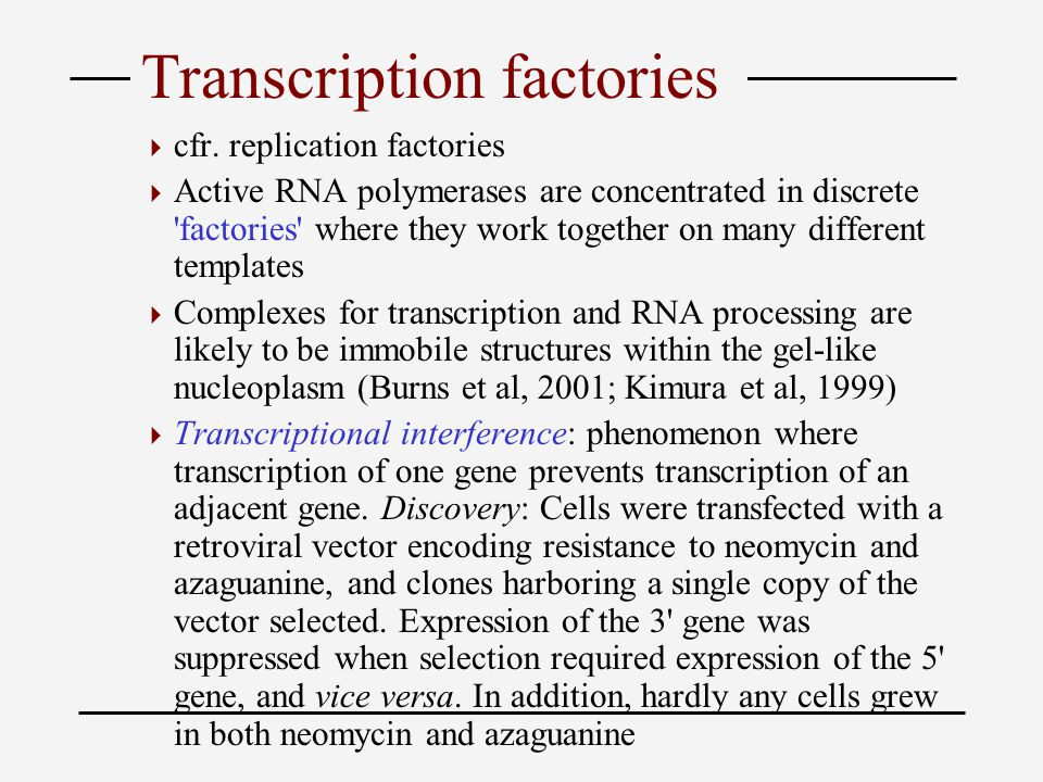 Transcription factories  cfr.