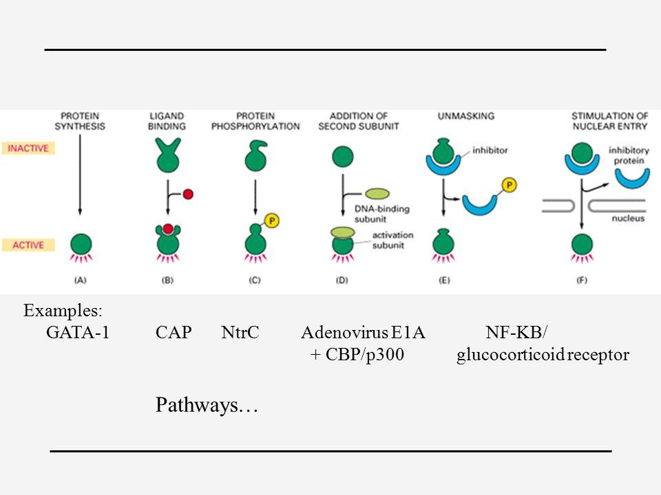 Examples: GATA-1CAPNtrC Adenovirus E1A NF-KB/ + CBP/p300 glucocorticoid receptor Pathways…