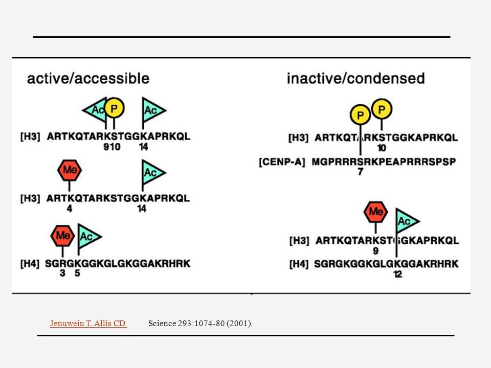 Jenuwein T, Allis CD.Science 293:1074-80 (2001).