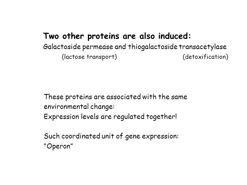 Two other proteins are also induced: Galactoside permease and thiogalactoside transacetylase (lactose transport) (detoxification) These proteins are a