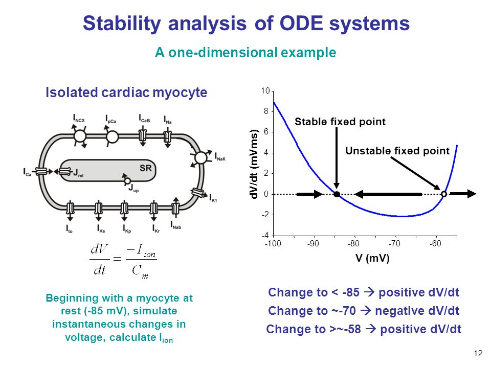 Stability analysis of ODE systems A one-dimensional example Isolated cardiac myocyte Beginning with a myocyte at rest (-85 mV), simulate instantaneous changes in voltage, calculate I ion V (mV) dV/dt (mVms) -100-90-80-70-60 -4 -2 0 2 4 6 8 10 Change to < -85  positive dV/dt Change to ~-70  negative dV/dt Change to >~-58  positive dV/dt Stable fixed point Unstable fixed point 12