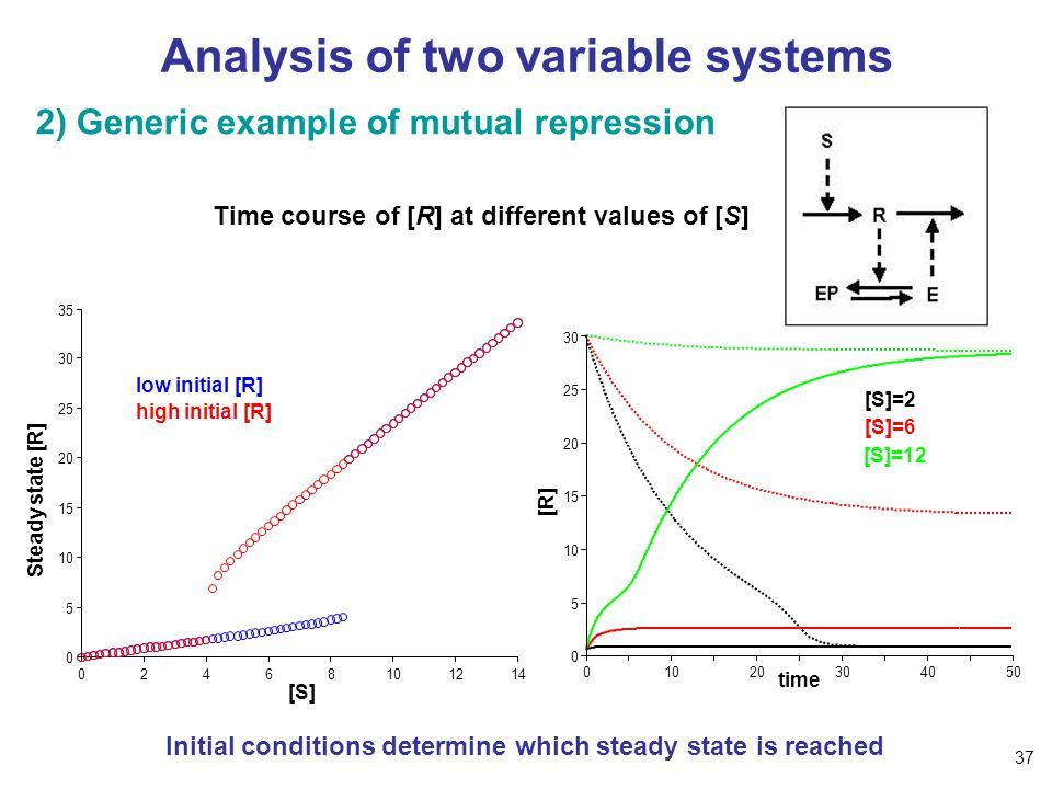 Analysis of two variable systems 2) Generic example of mutual repression [S] Steady state [R] low initial [R] high initial [R] Time course of [R] at different values of [S] 01020304050 0 5 10 15 20 25 30 [R] time [S]=2 [S]=12 [S]=6 Initial conditions determine which steady state is reached 37