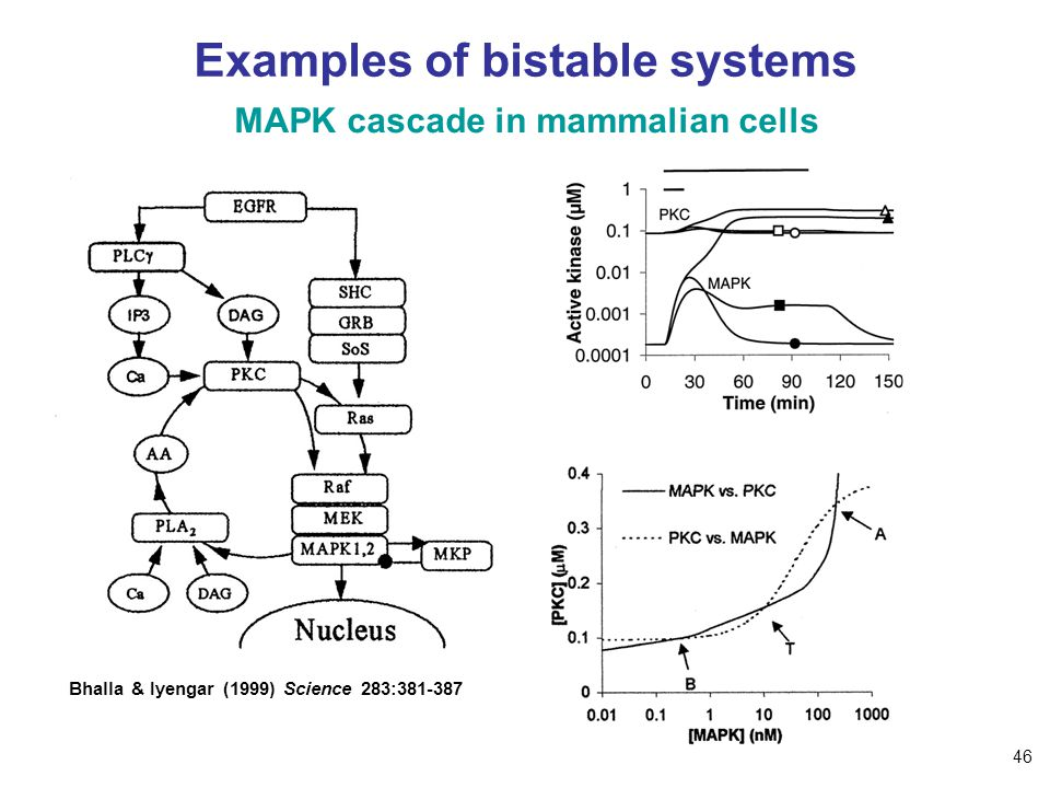 Examples of bistable systems MAPK cascade in mammalian cells Bhalla & Iyengar (1999) Science 283:381-387 46