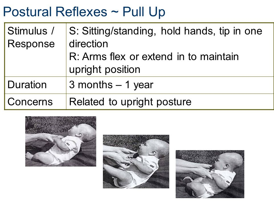 Stimulus / Response S: Sitting/standing, hold hands, tip in one direction R: Arms flex or extend in to maintain upright position Duration3 months – 1 year ConcernsRelated to upright posture Postural Reflexes ~ Pull Up