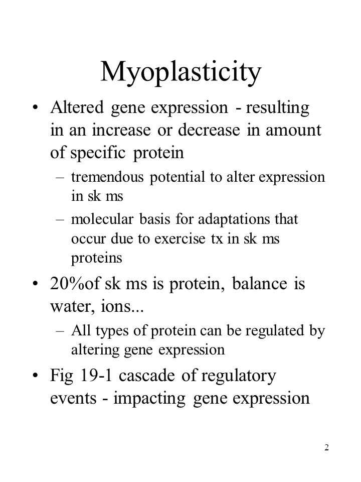 2 Myoplasticity Altered gene expression - resulting in an increase or decrease in amount of specific protein –tremendous potential to alter expression in sk ms –molecular basis for adaptations that occur due to exercise tx in sk ms proteins 20%of sk ms is protein, balance is water, ions...