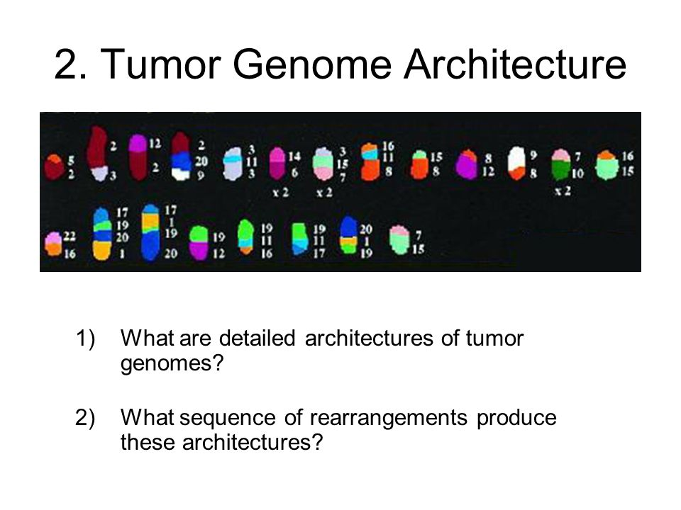 2. Tumor Genome Architecture 1)What are detailed architectures of tumor genomes.