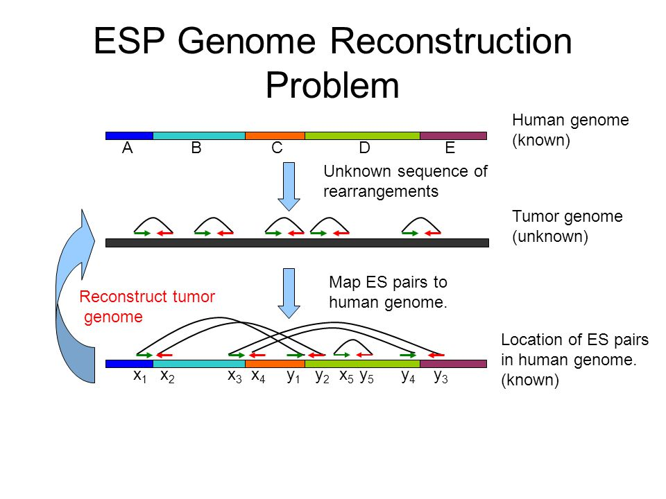 Human genome (known) Tumor genome (unknown) Unknown sequence of rearrangements Location of ES pairs in human genome.