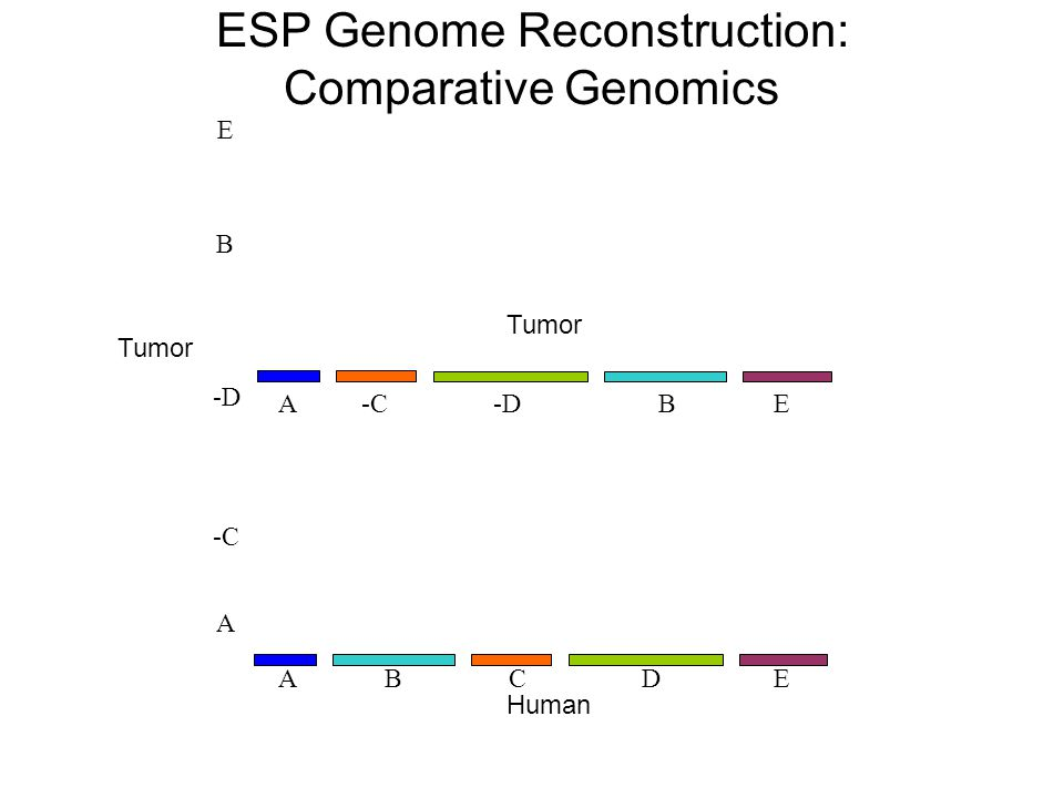 -C -D E A B -C-DEAB Tumor Human ESP Genome Reconstruction: Comparative Genomics BCEAD Tumor
