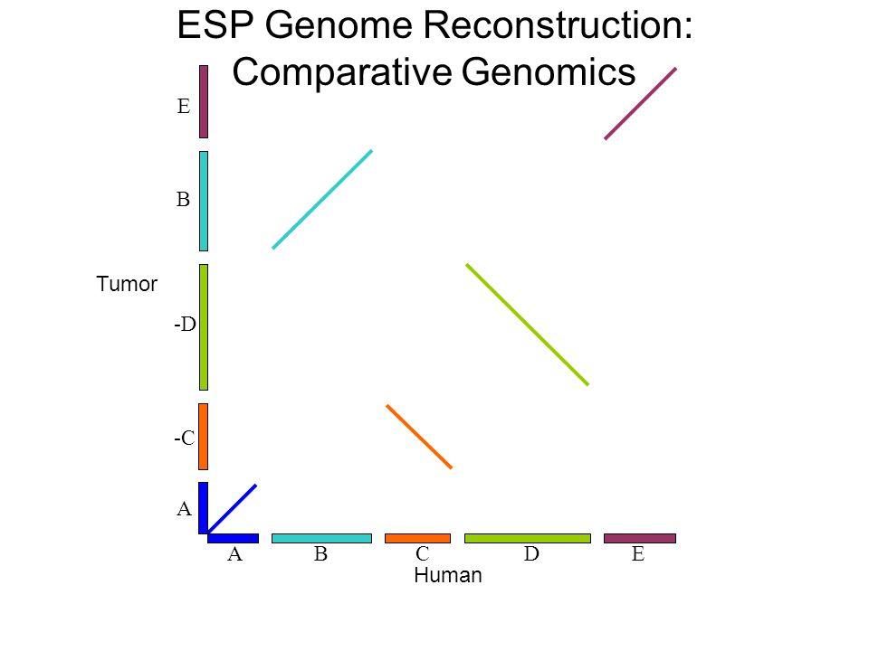 BCEAD -C -D E A B Tumor Human ESP Genome Reconstruction: Comparative Genomics