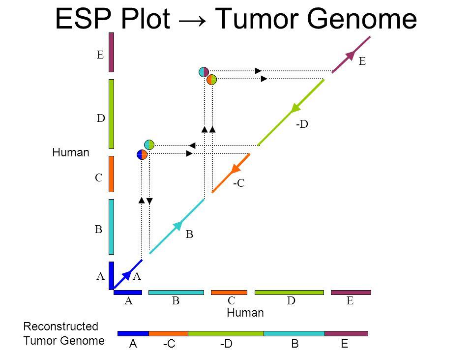 B C E A D Human B -D E A DAC E -C B -D EA B Reconstructed Tumor Genome ESP Plot → Tumor Genome