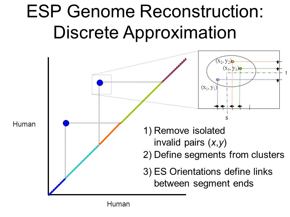 Human ESP Genome Reconstruction: Discrete Approximation (x 2, y 2 ) (x 3, y 3 ) (x 1, y 1 ) t s 3)ES Orientations define links between segment ends 2)Define segments from clusters 1)Remove isolated invalid pairs (x,y)