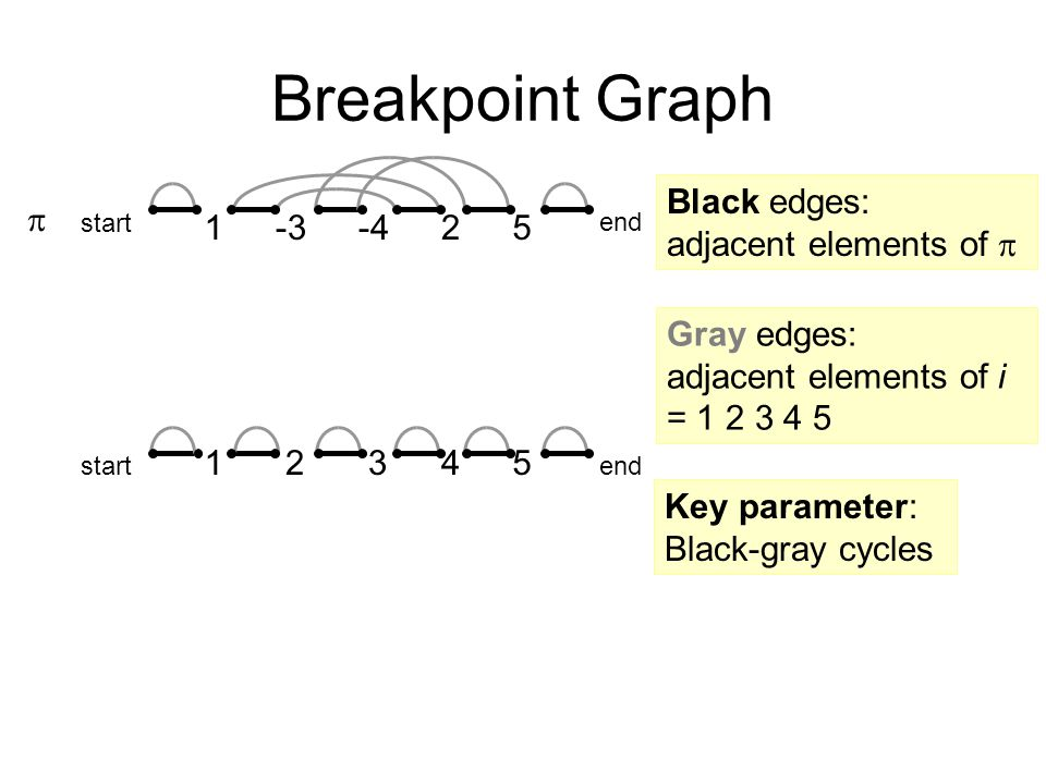 Breakpoint Graph end  2 3451 -425-31 start Black edges: adjacent elements of  end Gray edges: adjacent elements of i = 1 2 3 4 5 Key parameter: Black-gray cycles