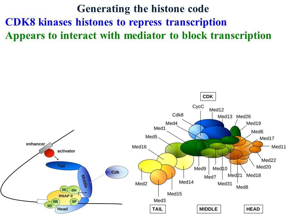 Generating the histone code Rad6 proteins ubiquitinate histone H2B to repress transcription Polycomb proteins ubiquitinate histone H2A to silence genes