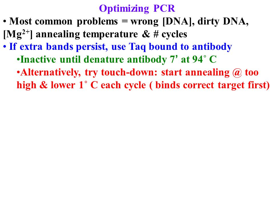 Optimizing PCR Most common problems = wrong [DNA], dirty DNA, [Mg 2+ ] annealing temperature & # cycles If extra bands persist, use Taq bound to antib