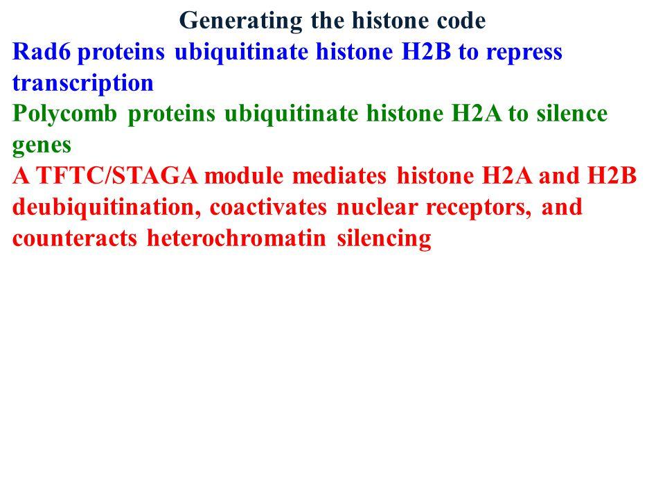 Generating the histone code Rad6 proteins ubiquitinate histone H2B to repress transcription Polycomb proteins ubiquitinate histone H2A to silence gene