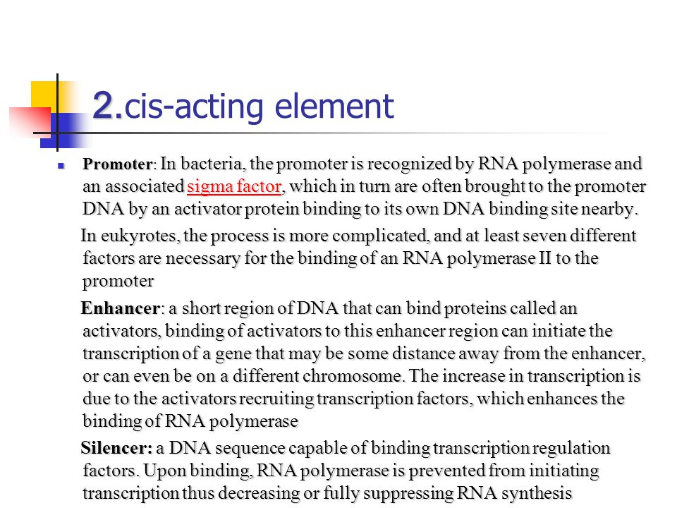 2. 2. cis-acting element Promoter : In bacteria, the promoter is recognized by RNA polymerase and an associated sigma factor, which in turn are often