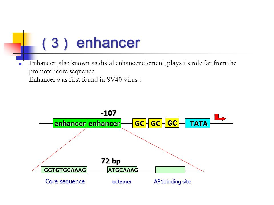 ( 3 ) enhancer Enhancer,also known as distal enhancer element, plays its role far from the promoter core sequence. Enhancer was first found in SV40 vi