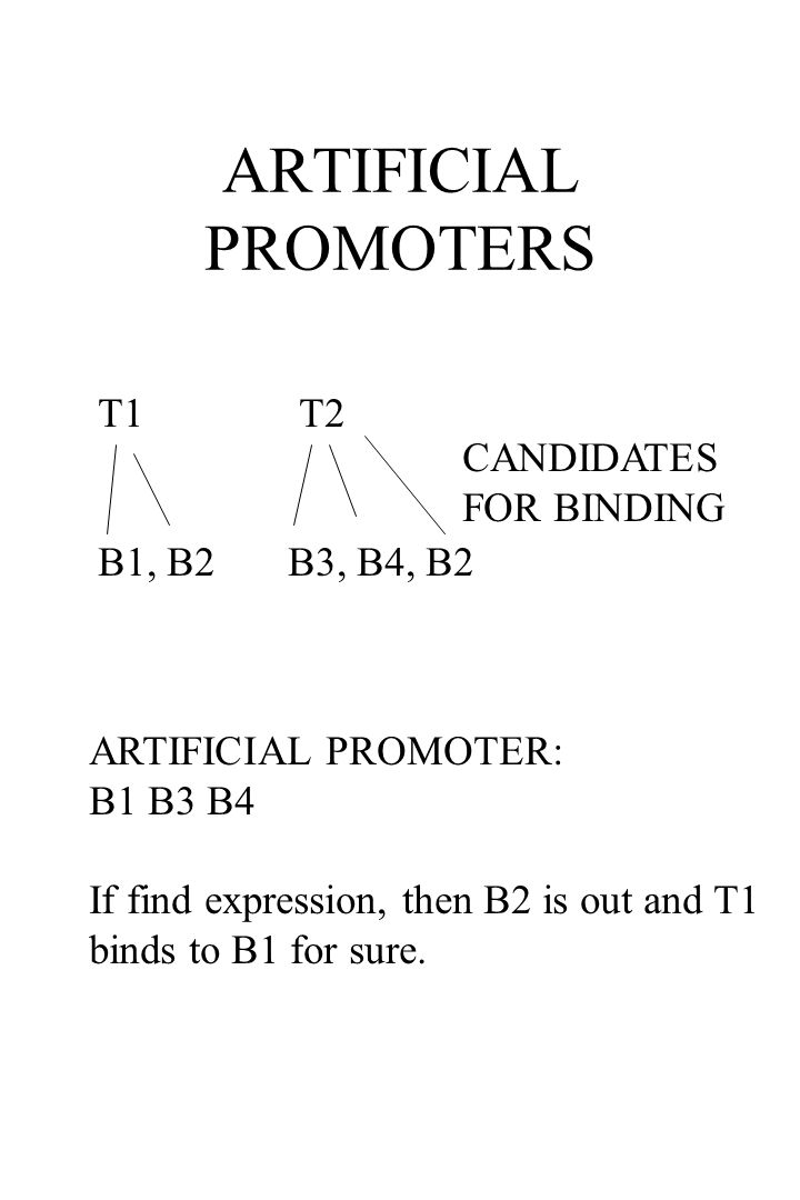 ARTIFICIAL PROMOTERS T1 T2 B1, B2 B3, B4, B2 CANDIDATES FOR BINDING ARTIFICIAL PROMOTER: B1 B3 B4 If find expression, then B2 is out and T1 binds to B1 for sure.