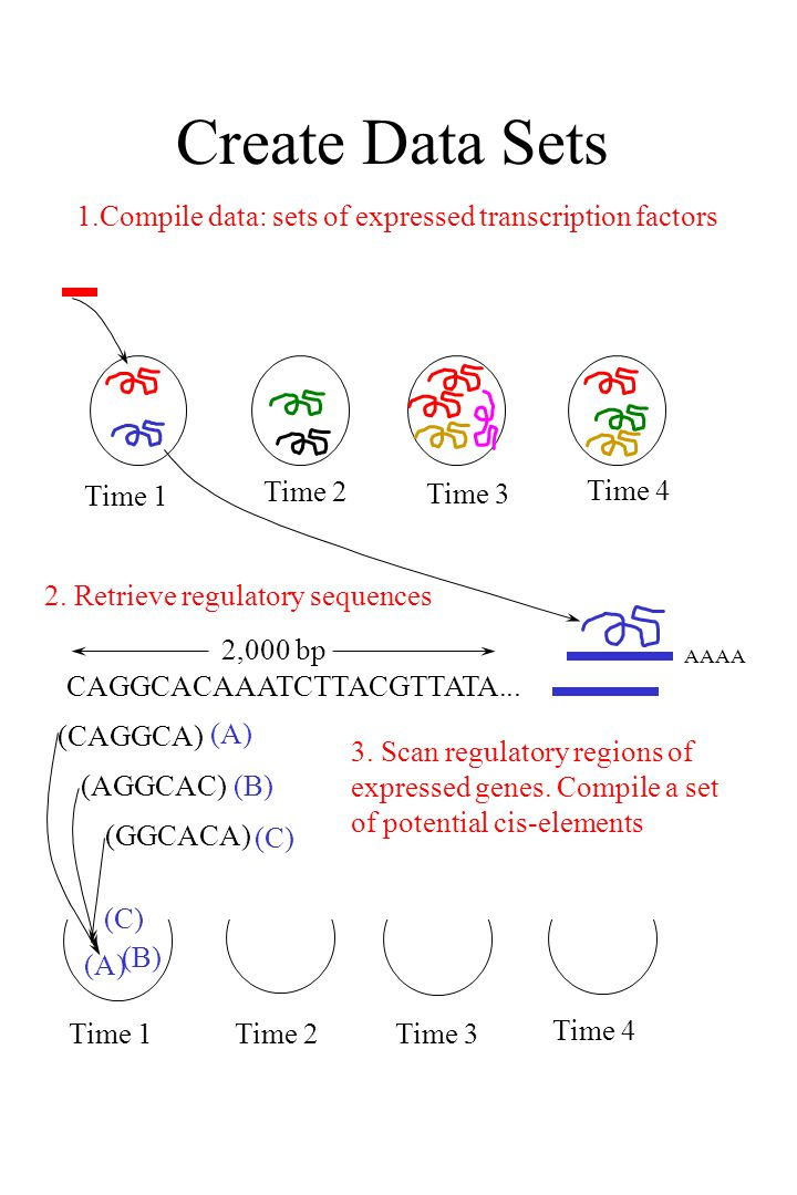Create Data Sets 1.Compile data: sets of expressed transcription factors Time 1 Time 2 Time 3 Time 4 CAGGCACAAATCTTACGTTATA...