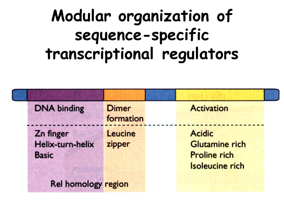 Modular organization of sequence-specific transcriptional regulators