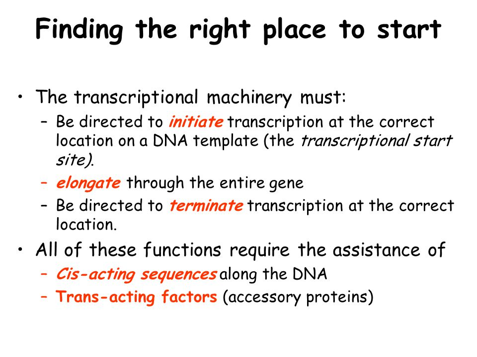 Finding the right place to start The transcriptional machinery must: –Be directed to initiate transcription at the correct location on a DNA template