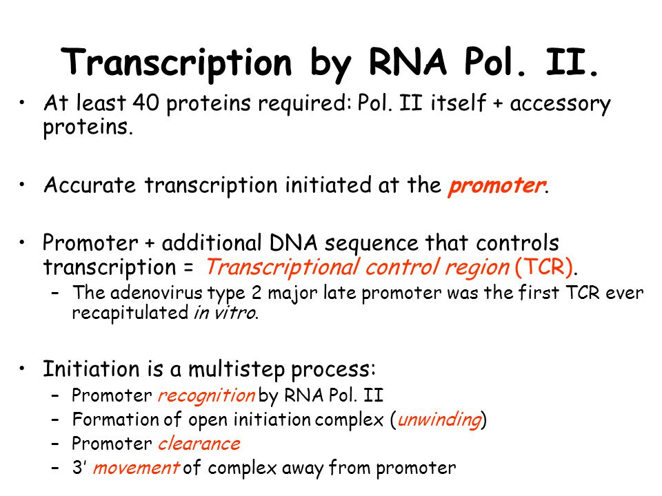 Transcription by RNA Pol. II. At least 40 proteins required: Pol. II itself + accessory proteins. Accurate transcription initiated at the promoter. Pr