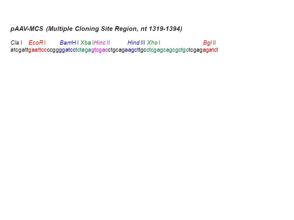 pAAV-MCS (Multiple Cloning Site Region, nt 1319-1394) Cla I EcoR I BamH I Xba IHinc II Hind III Xho I Bgl II atcgattgaattccccggggatcctctagagtcgacctgcagaagcttgcctcgagcagcgctgctcgagagatct