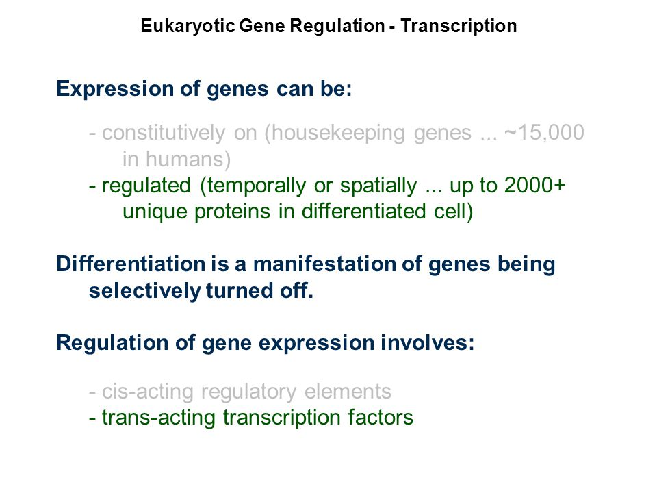 Eukaryotic Gene Regulation - Transcription Expression of genes can be: - constitutively on (housekeeping genes...