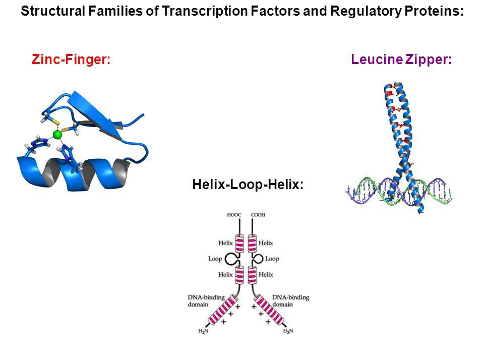 Structural Families of Transcription Factors and Regulatory Proteins: Zinc-Finger: Leucine Zipper: Helix-Loop-Helix: