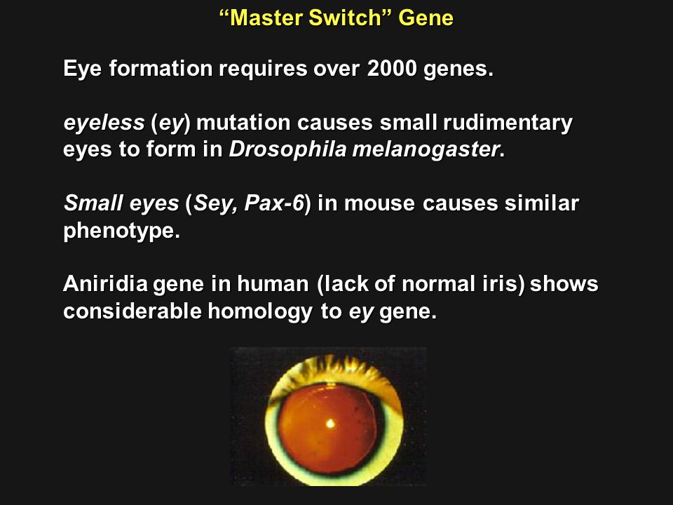 Master Switch Gene Eye formation requires over 2000 genes.