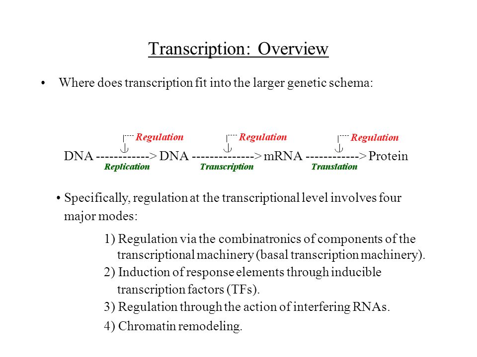 Transcription: Overview Where does transcription fit into the larger genetic schema: DNA ------------> DNA --------------> mRNA ------------> Protein Specifically, regulation at the transcriptional level involves four major modes: 1) Regulation via the combinatronics of components of the transcriptional machinery (basal transcription machinery).