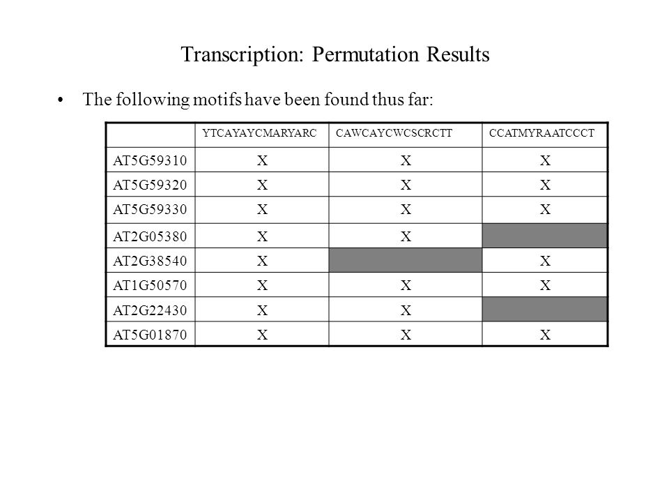 Transcription: Permutation Results The following motifs have been found thus far: YTCAYAYCMARYARCCAWCAYCWCSCRCTTCCATMYRAATCCCT AT5G59310XXX AT5G59320XXX AT5G59330XXX AT2G05380XX AT2G38540XX AT1G50570XXX AT2G22430XX AT5G01870XXX