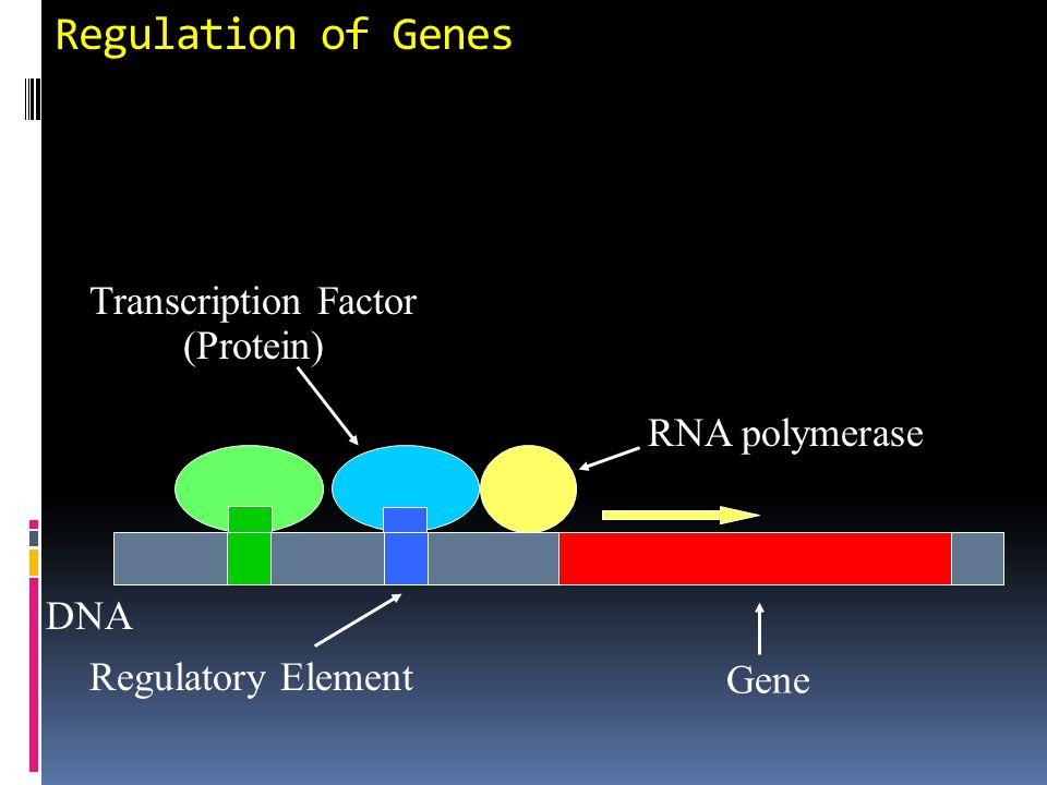 General organization of an inducible gene