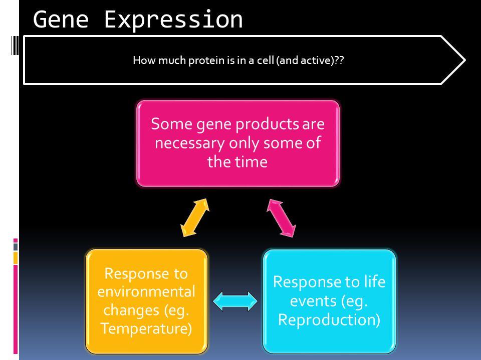 Regulation of Genes Gene RNA polymerase Transcription Factor Regulatory Element DNA New protein