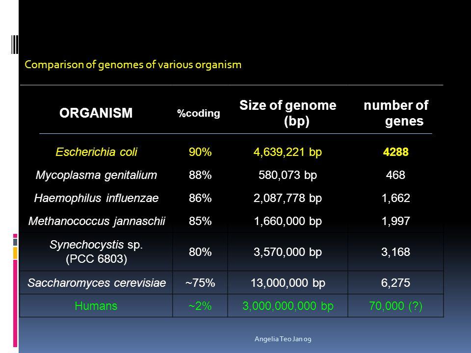 Topics:  Lac Operon (Negative control & Catabolic repression)  Tryptophan Operon (Positive control)  Histidine Operon (Attenuator) Angelia Teo Jan