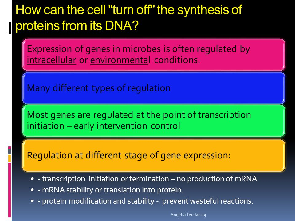 Gene Regulation in bacteria  How do single-celled prokaryotes like E. coli know how to respond to their environments?  Each environmental cue genera