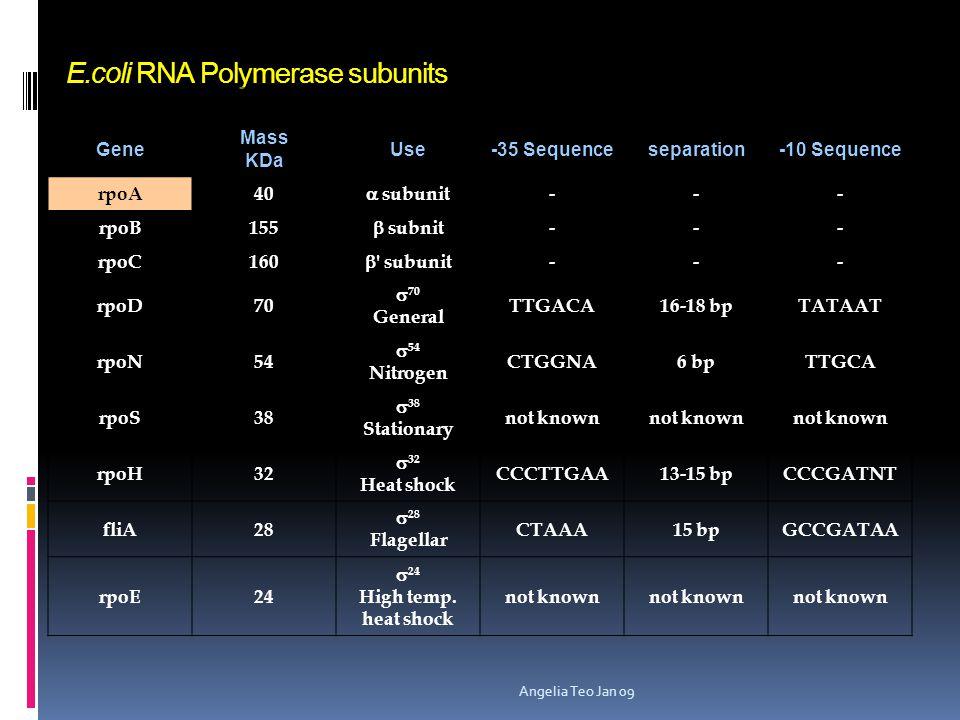 Different forms of gene regulation a. Regulation by DNA Replication (default) b. Transcriptional Regulation by different s-factors. c. Negative Regula