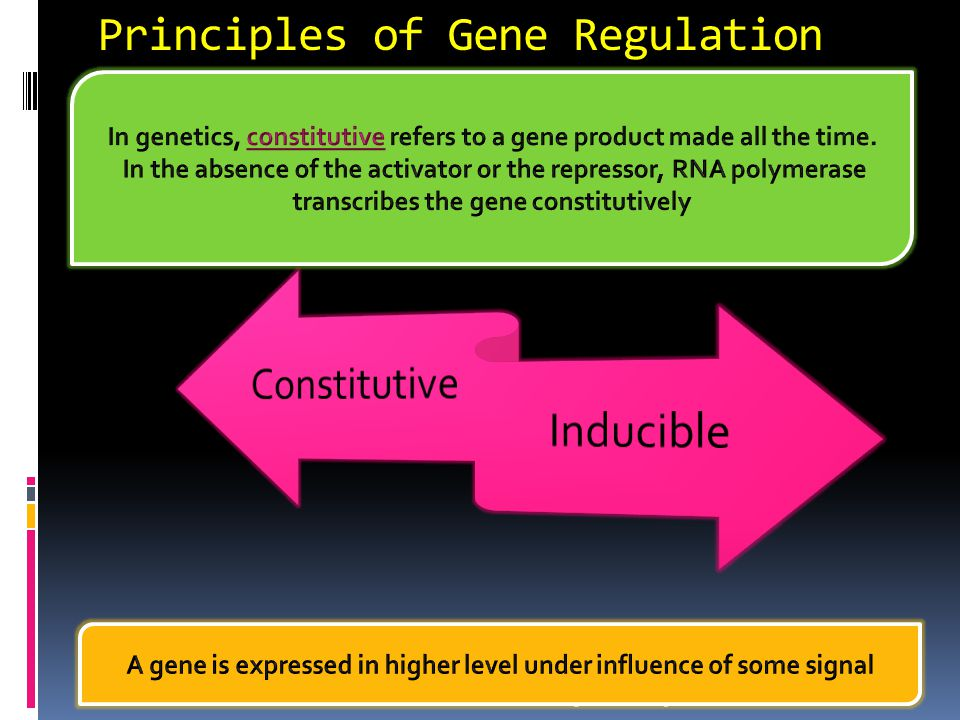 Regulation of Gene Expression  A cell contains the entire genome of an organism– ALL the DNA.  Gene expression = transcribing and translating the ge