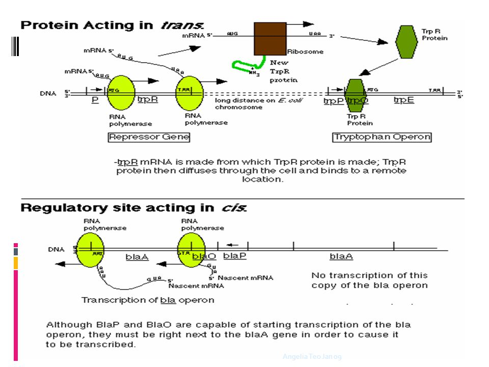 Cis or Trans-regulation  DNA element 1 and DNA element 2 How to determine whether DNA element 1 is acting in cis or in trans to one another ? Test: i