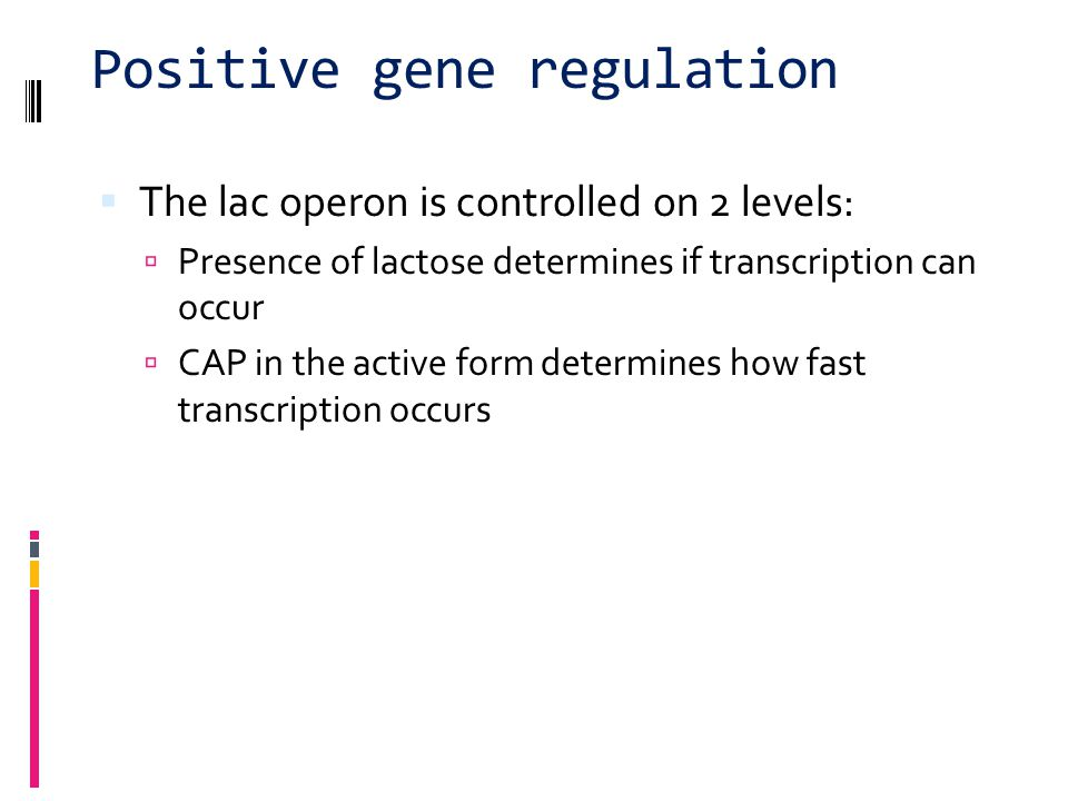 Positive gene regulation  When glucose levels rise again, cAMP levels will drop  no longer bound to CAP  CAP can't bind to promoter  transcription