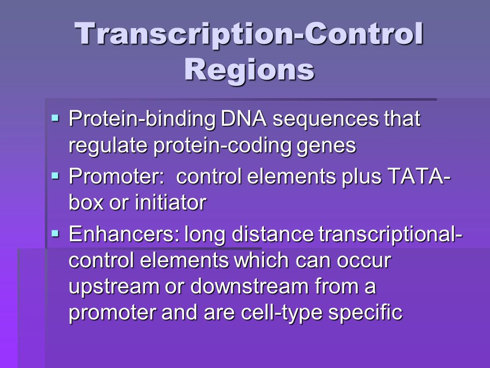 Regulation of Transcription- Factor Activity  Expression of transcription factor by a cell is regulated  Activities of those factors expressed are also controlled indirectly  This is done by interaction between proteins on surface of cell and by external hormones and growth factors