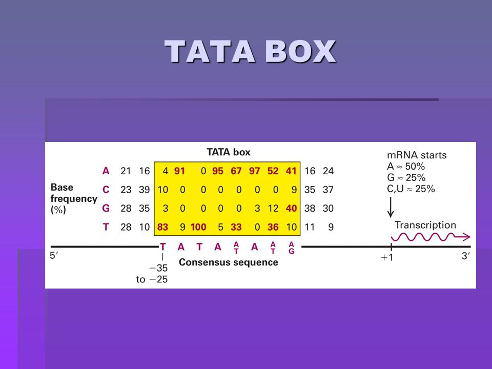 Types of Promoter Sequences in Eukaryotic DNA  3 Types  TATA box: this is the most common type found upstream from start site and rapidly transcribes genes  Initiators: these have cytosine at -1 position and adenine at start site (+1)  CpG Islands: located upstream from start site and have low rate of transcribed genes